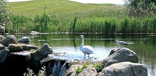 © Ostsee Golf Resort Wittenbeck